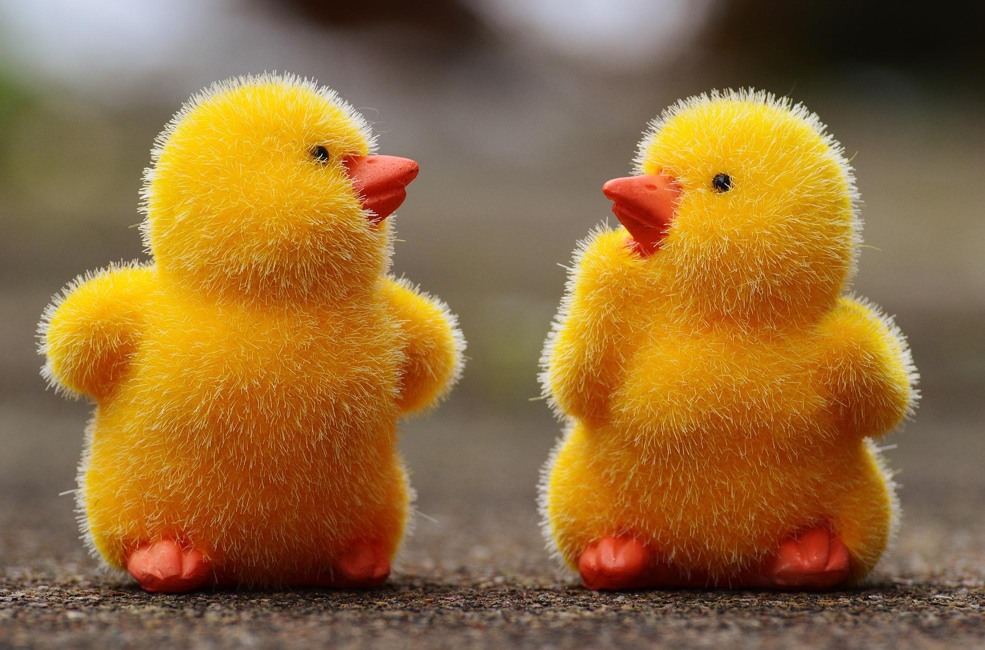 chicks-1159192_1920